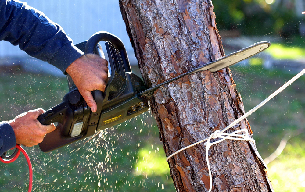 About A to Z Tree Removal Service Orlando